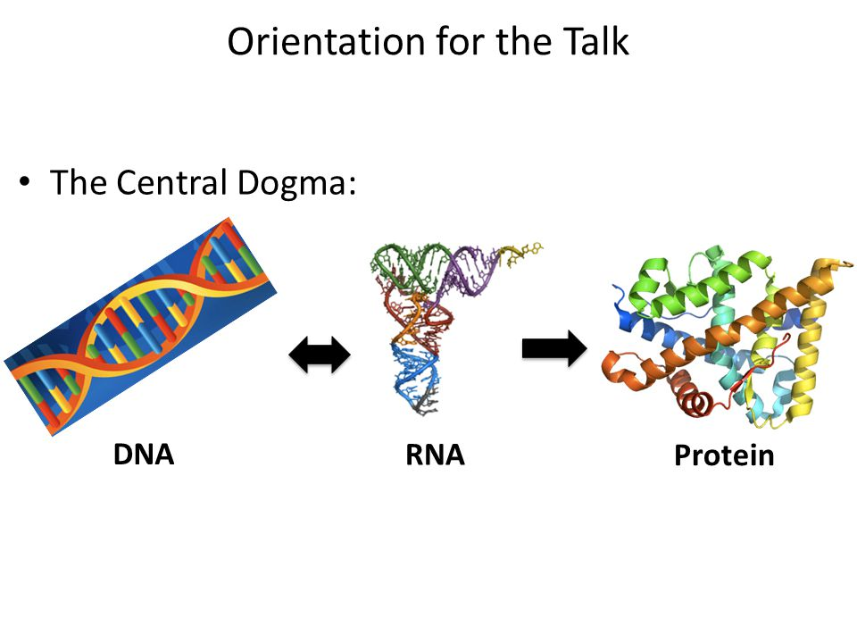 Orientation for the Talk The Central Dogma: DNA RNA Protein