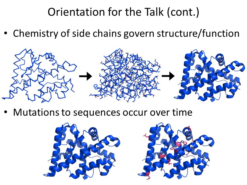 Orientation for the Talk (cont.) Chemistry of side chains govern structure/function Mutations to sequences occur over time