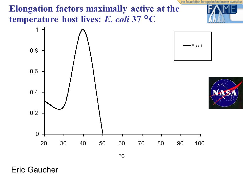 Elongation factors maximally active at the temperature host lives: E. coli 37 °C Eric Gaucher