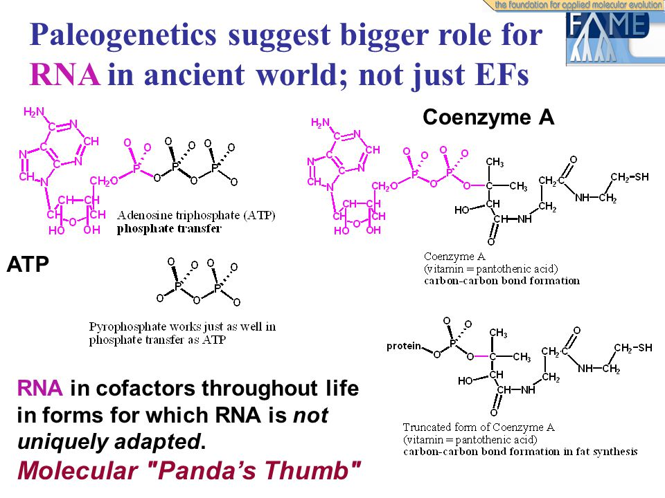 Paleogenetics suggest bigger role for RNA in ancient world; not just EFs RNA in cofactors throughout life in forms for which RNA is not uniquely adapted.