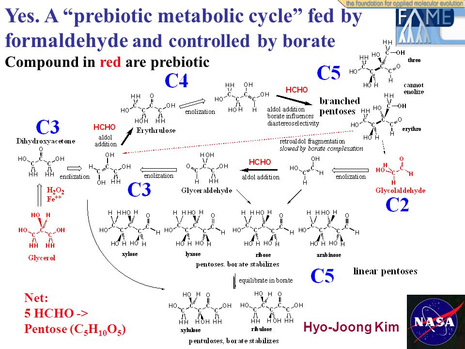 "Yes. A ""prebiotic metabolic cycle"" fed by formaldehyde and controlled by borate Compound in red are prebiotic Net: 5 HCHO -> Pentose (C 5 H 10 O 5 ) H"