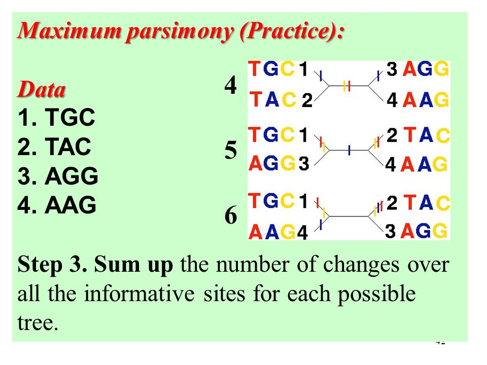 42 Maximum parsimony (Practice): Data 1.TGC 2.TAC 3.AGG 4.AAG Step 3.