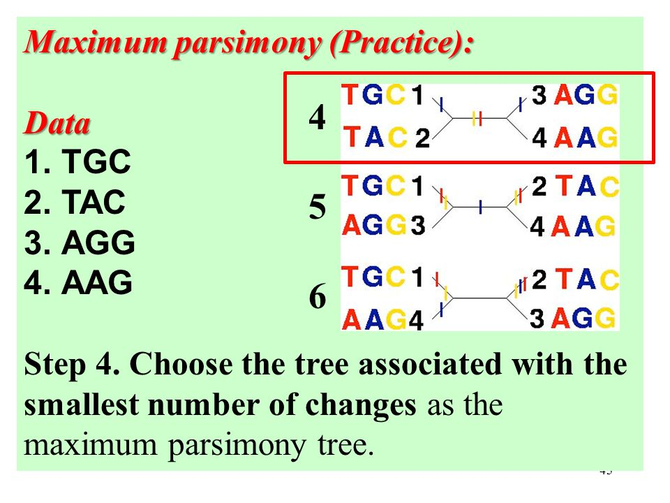 43 Maximum parsimony (Practice): Data 1.TGC 2.TAC 3.AGG 4.AAG Step 4.