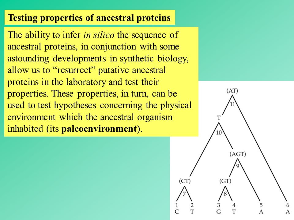47 Testing properties of ancestral proteins The ability to infer in silico the sequence of ancestral proteins, in conjunction with some astounding developments in synthetic biology, allow us to resurrect putative ancestral proteins in the laboratory and test their properties.