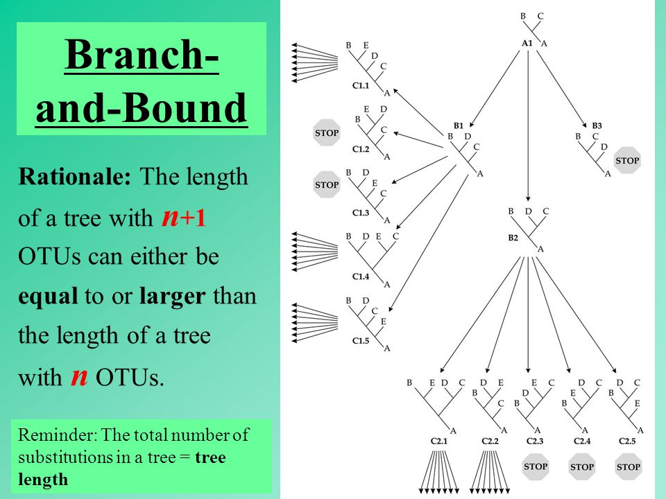 53 Branch- and-Bound Rationale: The length of a tree with n +1 OTUs can either be equal to or larger than the length of a tree with n OTUs.