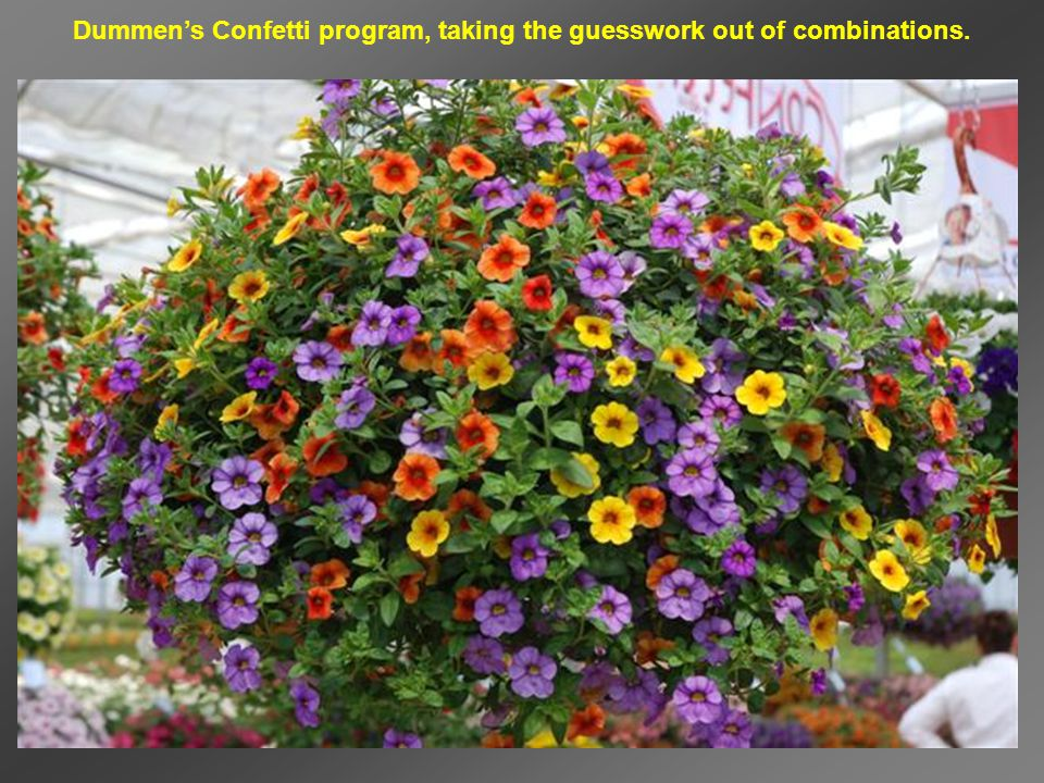 Dummen's Confetti program, taking the guesswork out of combinations.