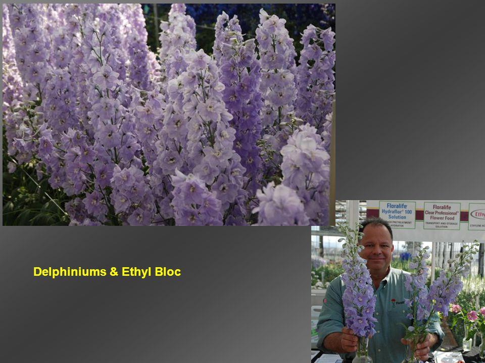 Delphiniums & Ethyl Bloc