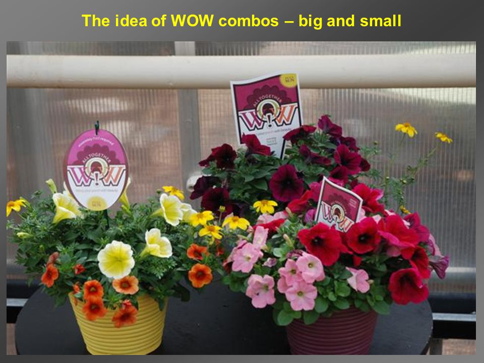 The idea of WOW combos – big and small