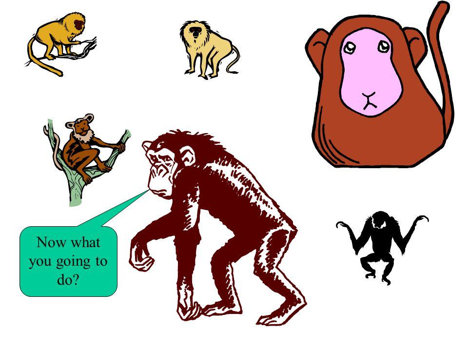 You wont dare Wanna bet monkey boy ! ! Come my followers!
