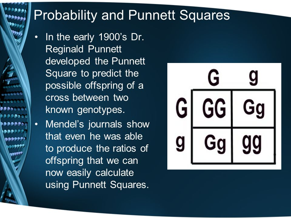 Probability and Punnett Squares In the early 1900's Dr.