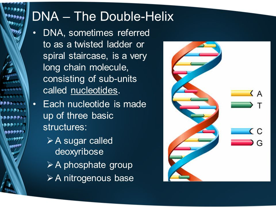 DNA – The Double-Helix DNA, sometimes referred to as a twisted ladder or spiral staircase, is a very long chain molecule, consisting of sub-units called nucleotides.