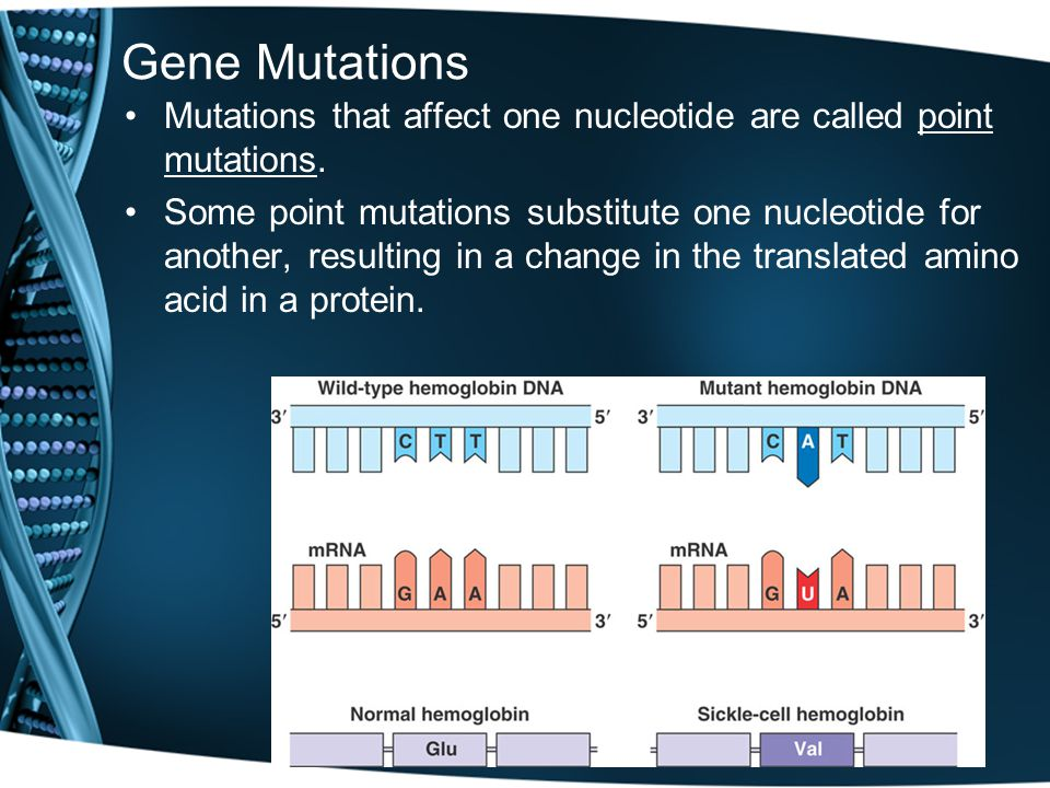 Gene Mutations Mutations that affect one nucleotide are called point mutations.