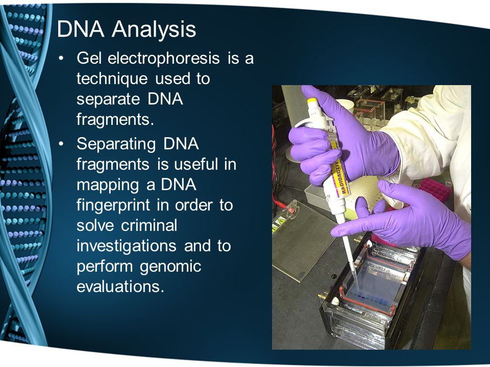 DNA Analysis Gel electrophoresis is a technique used to separate DNA fragments.