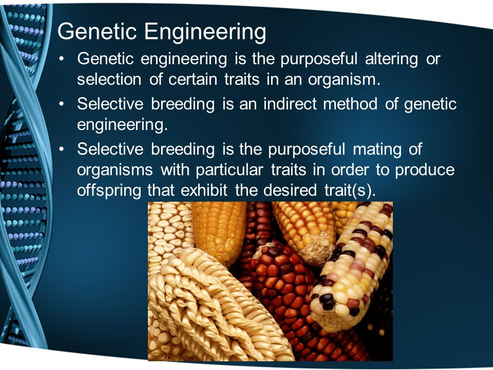 Genetic Engineering Genetic engineering is the purposeful altering or selection of certain traits in an organism.