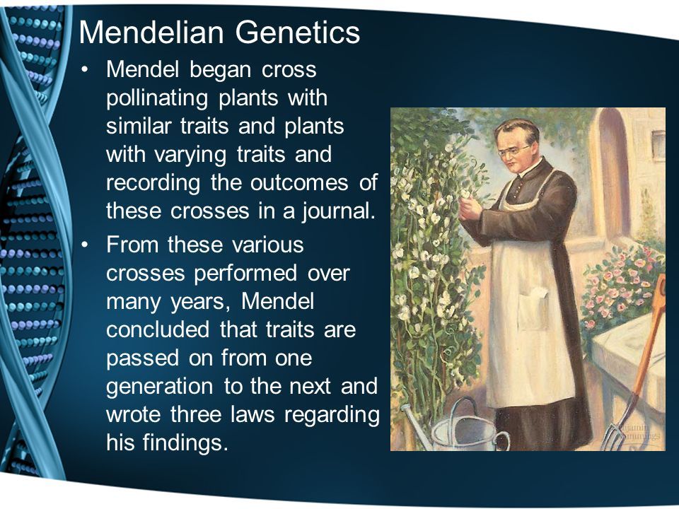 Mendelian Genetics Mendel began cross pollinating plants with similar traits and plants with varying traits and recording the outcomes of these crosses in a journal.