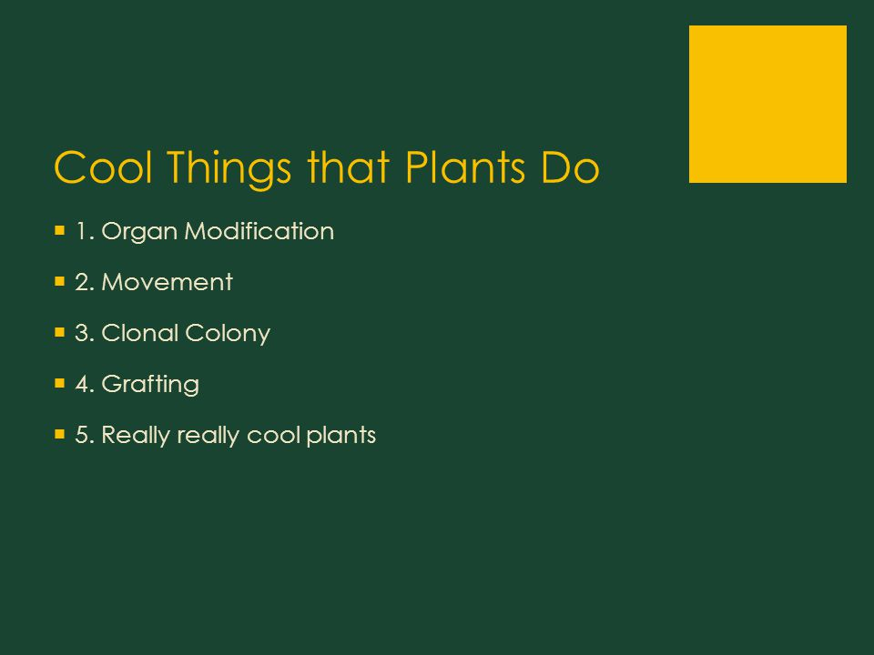 Cool Things that Plants Do  1. Organ Modification  2.