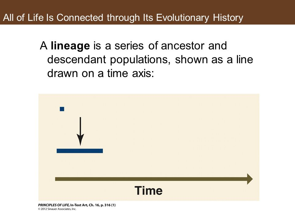 All of Life Is Connected through Its Evolutionary History A lineage is a series of ancestor and descendant populations, shown as a line drawn on a time axis: