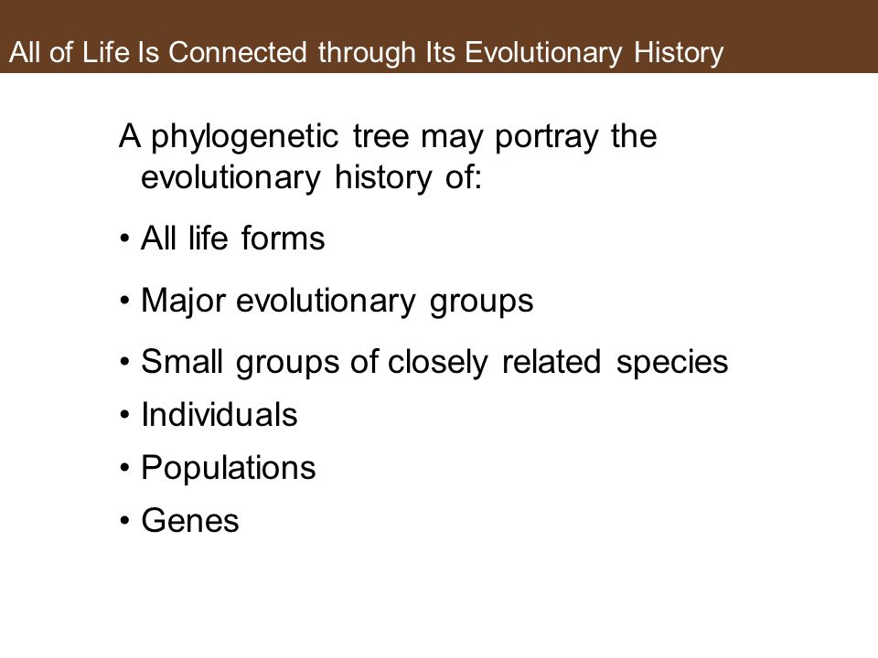 All of Life Is Connected through Its Evolutionary History A phylogenetic tree may portray the evolutionary history of: All life forms Major evolutiona