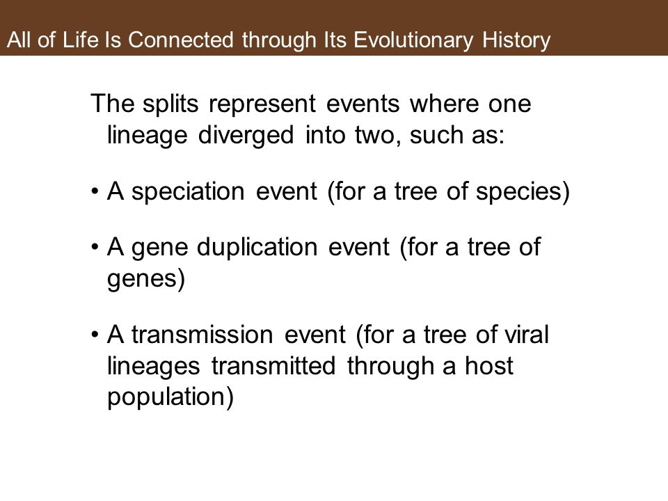 All of Life Is Connected through Its Evolutionary History The splits represent events where one lineage diverged into two, such as: A speciation event (for a tree of species) A gene duplication event (for a tree of genes) A transmission event (for a tree of viral lineages transmitted through a host population)