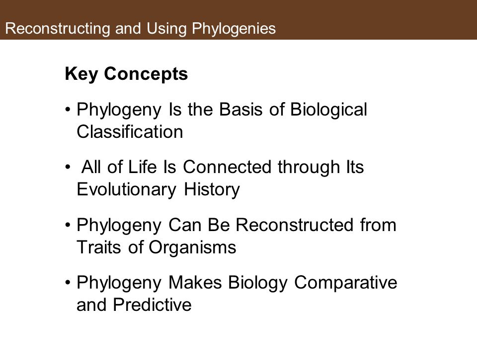 Key Concepts Phylogeny Is the Basis of Biological Classification All of Life Is Connected through Its Evolutionary History Phylogeny Can Be Reconstructed from Traits of Organisms Phylogeny Makes Biology Comparative and Predictive