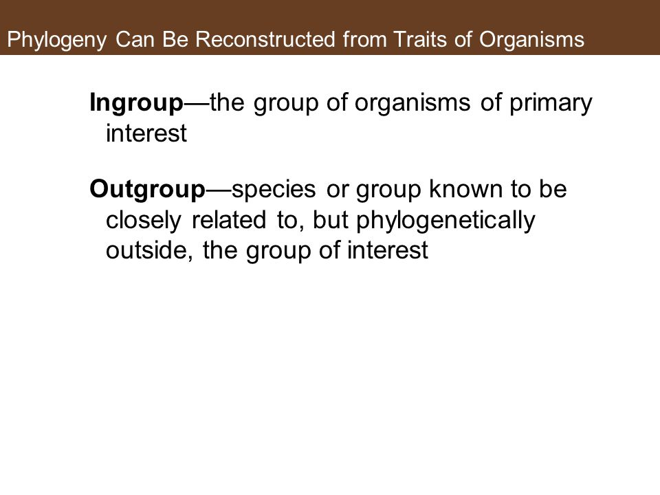 Phylogeny Can Be Reconstructed from Traits of Organisms Ingroup—the group of organisms of primary interest Outgroup—species or group known to be closely related to, but phylogenetically outside, the group of interest