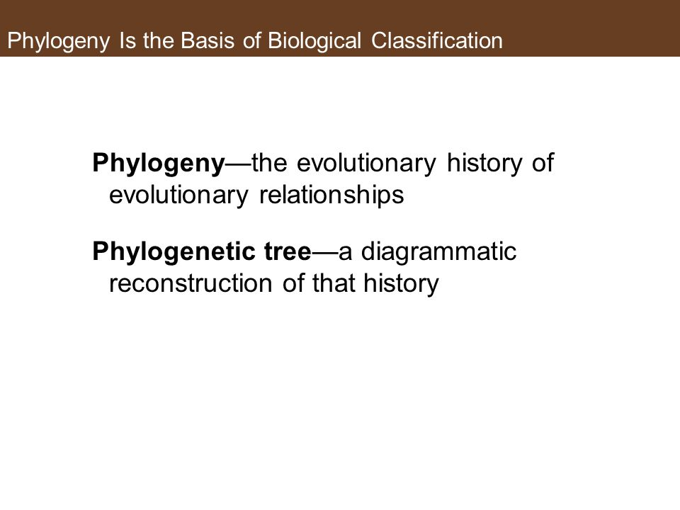 Phylogeny Is the Basis of Biological Classification Phylogeny—the evolutionary history of evolutionary relationships Phylogenetic tree—a diagrammatic