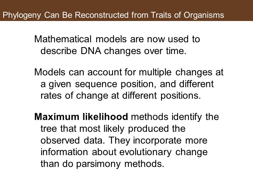 Phylogeny Can Be Reconstructed from Traits of Organisms Mathematical models are now used to describe DNA changes over time. Models can account for mul