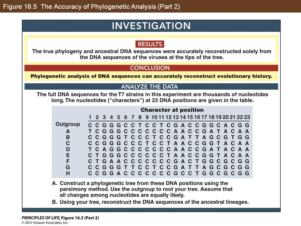 Figure 16.5 The Accuracy of Phylogenetic Analysis (Part 2)