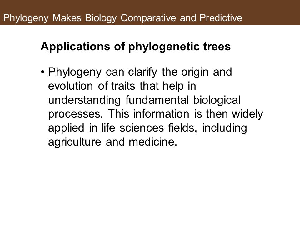 Phylogeny Makes Biology Comparative and Predictive Applications of phylogenetic trees Phylogeny can clarify the origin and evolution of traits that help in understanding fundamental biological processes.