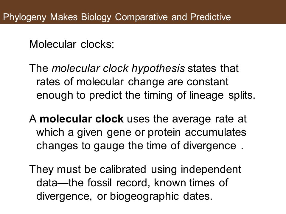 Phylogeny Makes Biology Comparative and Predictive Molecular clocks: The molecular clock hypothesis states that rates of molecular change are constant