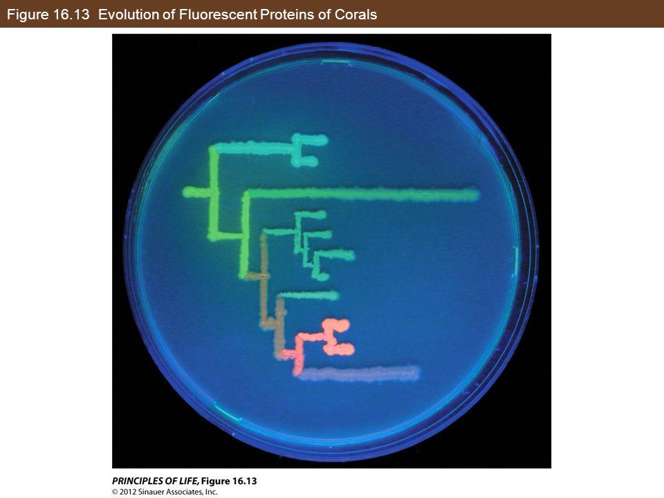 Figure 16.13 Evolution of Fluorescent Proteins of Corals