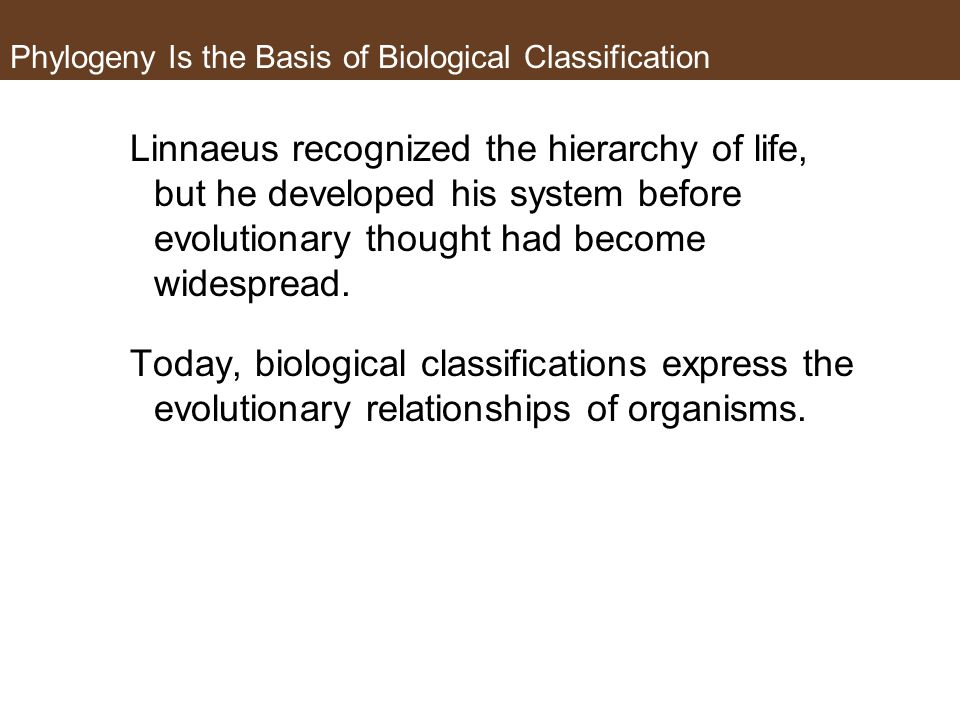 Phylogeny Is the Basis of Biological Classification Linnaeus recognized the hierarchy of life, but he developed his system before evolutionary thought had become widespread.