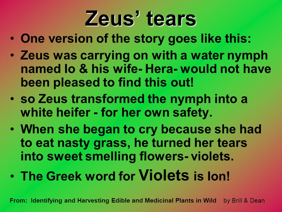 Zeus' tears One version of the story goes like this: Zeus was carrying on with a water nymph named Io & his wife- Hera- would not have been pleased to