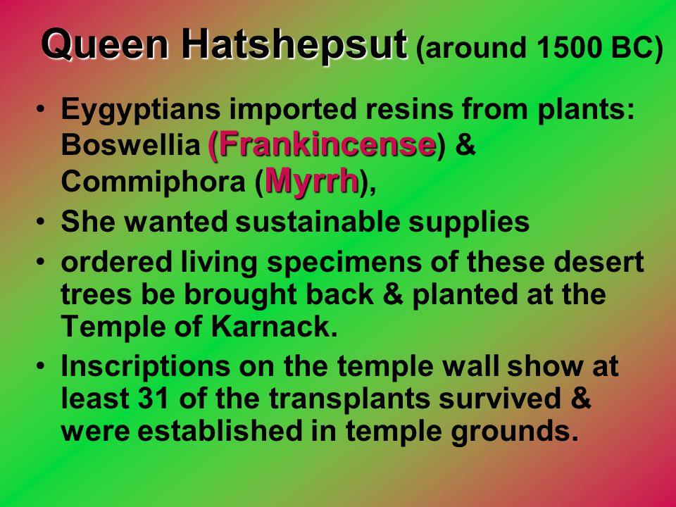 Queen Hatshepsut Queen Hatshepsut (around 1500 BC) (Frankincense MyrrhEygyptians imported resins from plants: Boswellia (Frankincense ) & Commiphora (