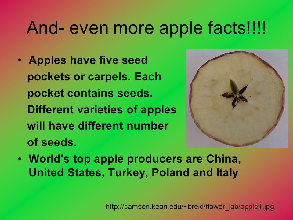 And- even more apple facts!!!! Apples have five seed pockets or carpels. Each pocket contains seeds. Different varieties of apples will have different