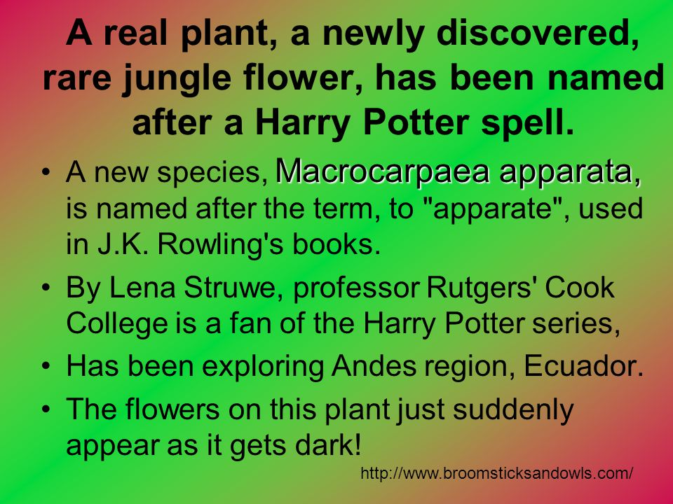 A real plant, a newly discovered, rare jungle flower, has been named after a Harry Potter spell. Macrocarpaea apparata,A new species, Macrocarpaea app