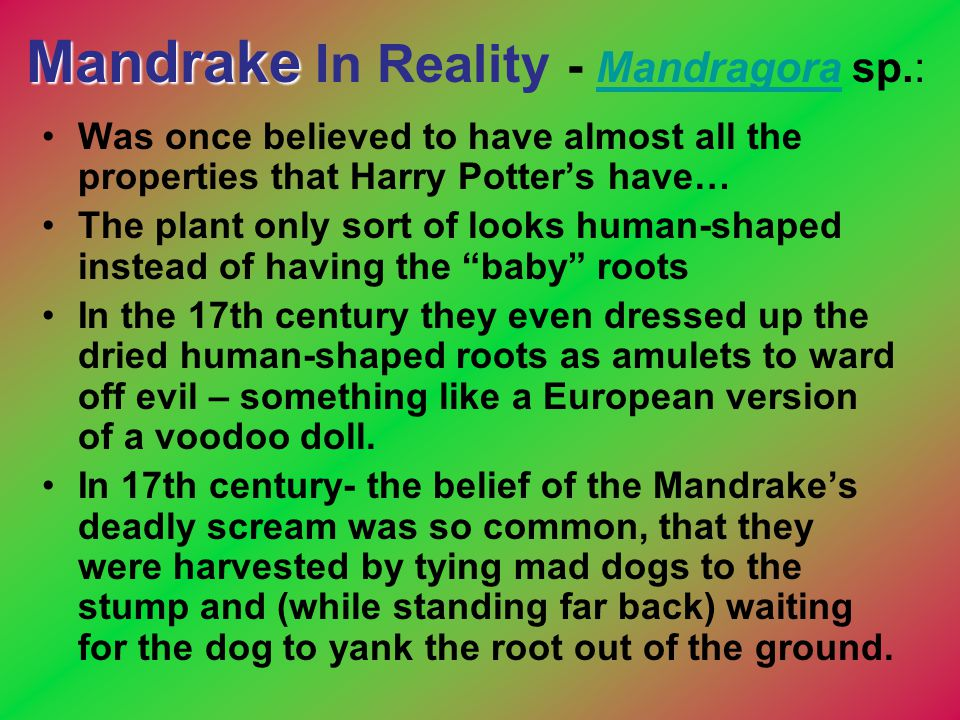 Mandrake Mandrake In Reality - Mandragora sp.: Mandragora Was once believed to have almost all the properties that Harry Potter's have… The plant only