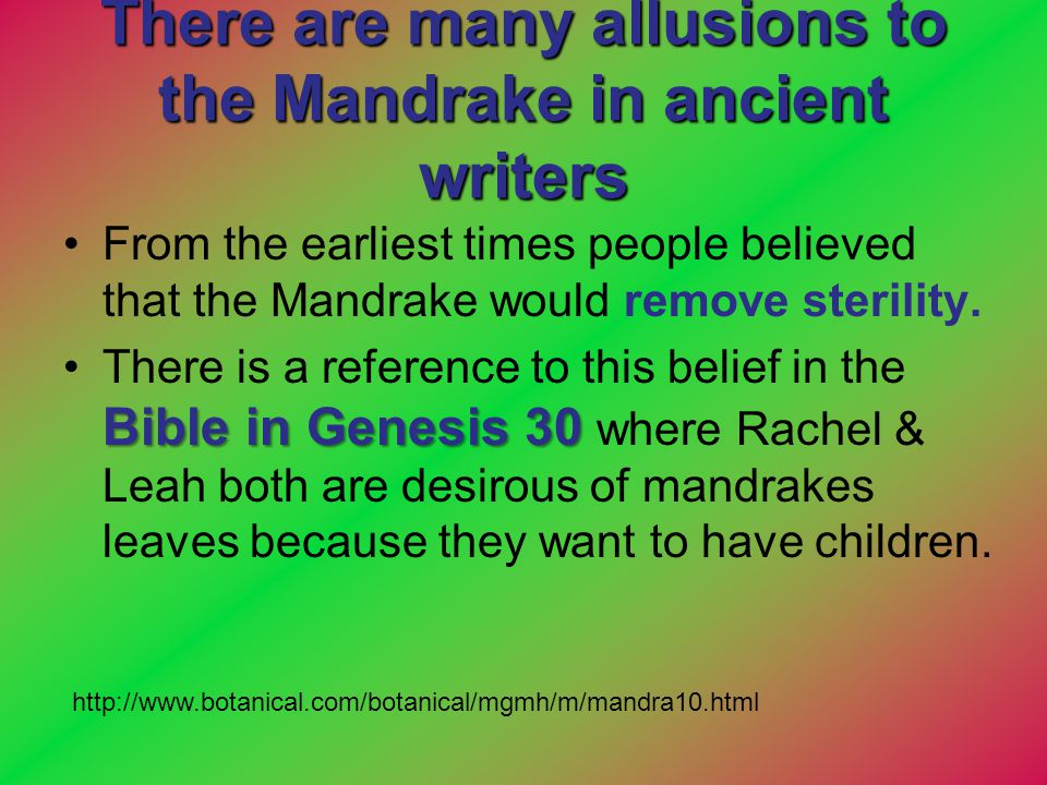 There are many allusions to the Mandrake in ancient writers From the earliest times people believed that the Mandrake would remove sterility. Bible in