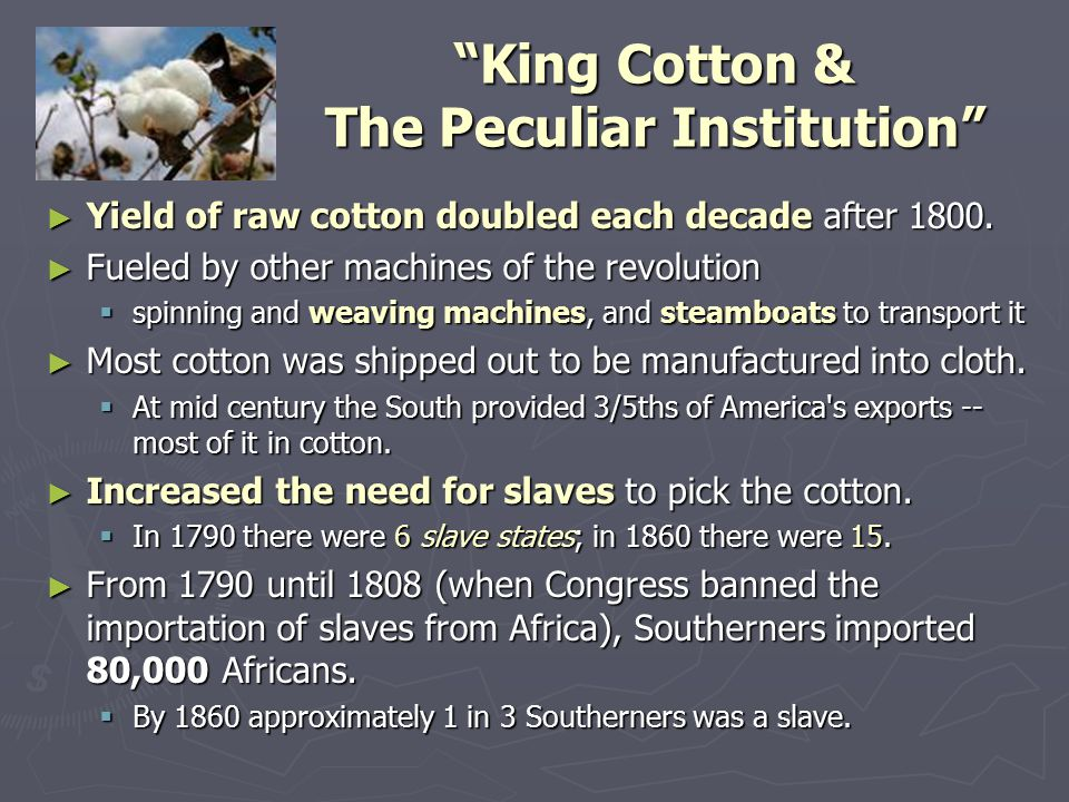 """King Cotton & The Peculiar Institution"" ► Yield of raw cotton doubled each decade after 1800. ► Fueled by other machines of the revolution  spinning"