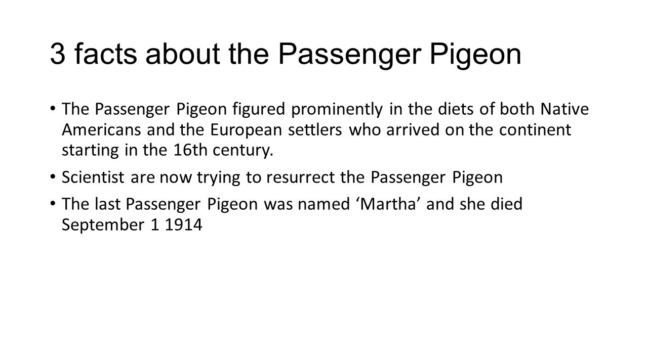 3 facts about the Passenger Pigeon The Passenger Pigeon figured prominently in the diets of both Native Americans and the European settlers who arrive