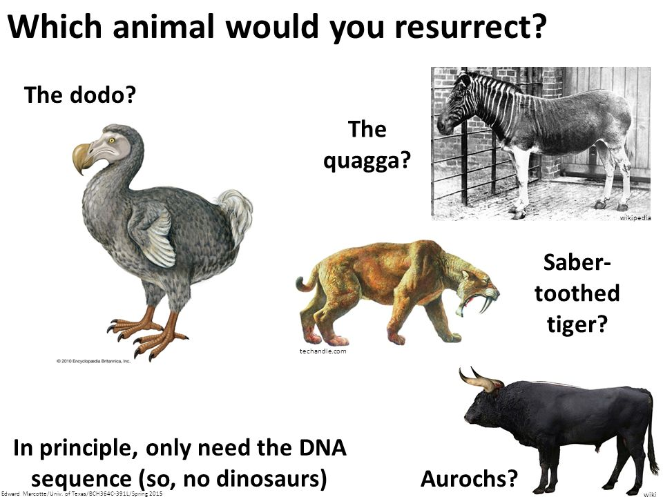 Which animal would you resurrect.The dodo.