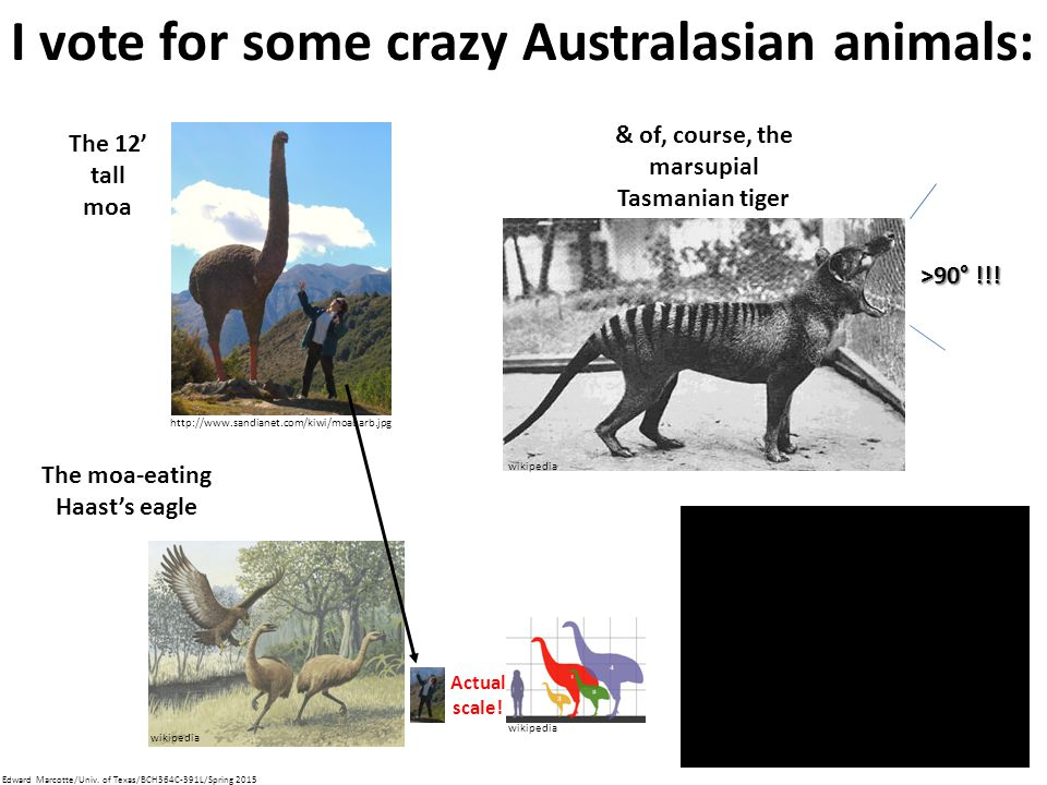 I vote for some crazy Australasian animals: The 12' tall moa The moa-eating Haast's eagle & of, course, the marsupial Tasmanian tiger >90° !!.