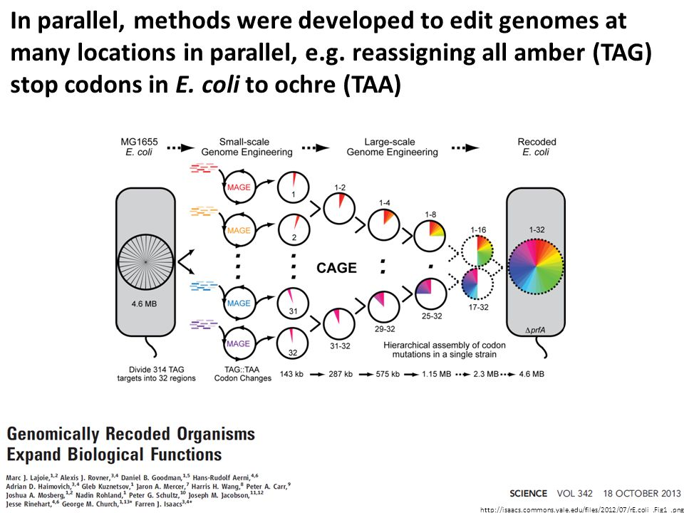 In parallel, methods were developed to edit genomes at many locations in parallel, e.g.