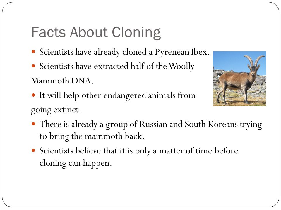 Facts About Cloning Scientists have already cloned a Pyrenean Ibex.