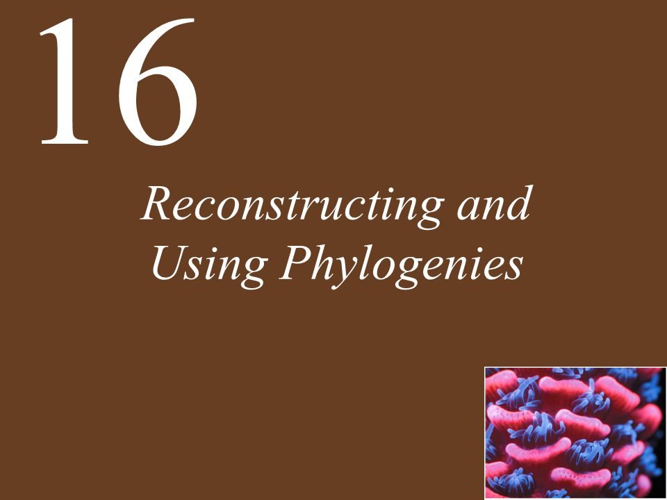 Reconstructing and Using Phylogenies 16