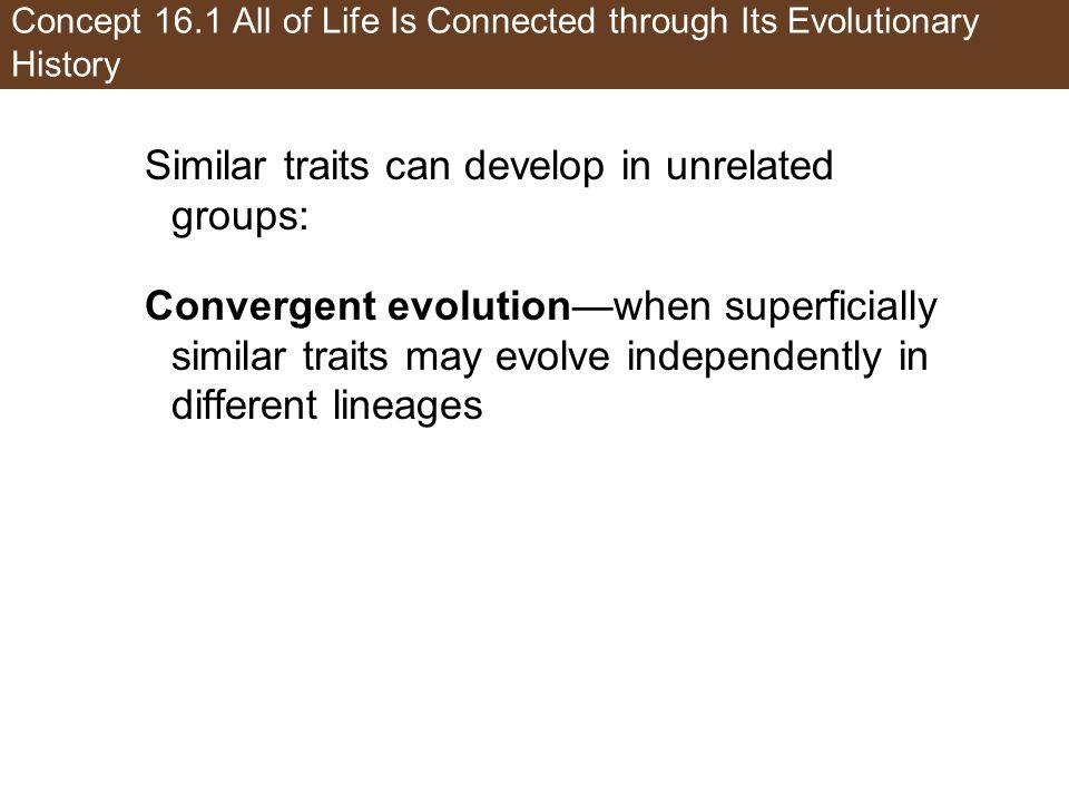 Concept 16.1 All of Life Is Connected through Its Evolutionary History Similar traits can develop in unrelated groups: Convergent evolution—when superficially similar traits may evolve independently in different lineages