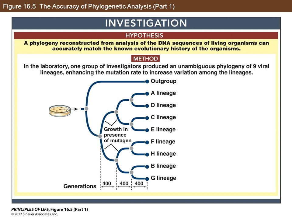 Figure 16.5 The Accuracy of Phylogenetic Analysis (Part 1)