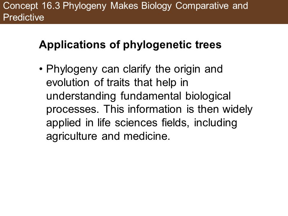 Concept 16.3 Phylogeny Makes Biology Comparative and Predictive Applications of phylogenetic trees Phylogeny can clarify the origin and evolution of traits that help in understanding fundamental biological processes.