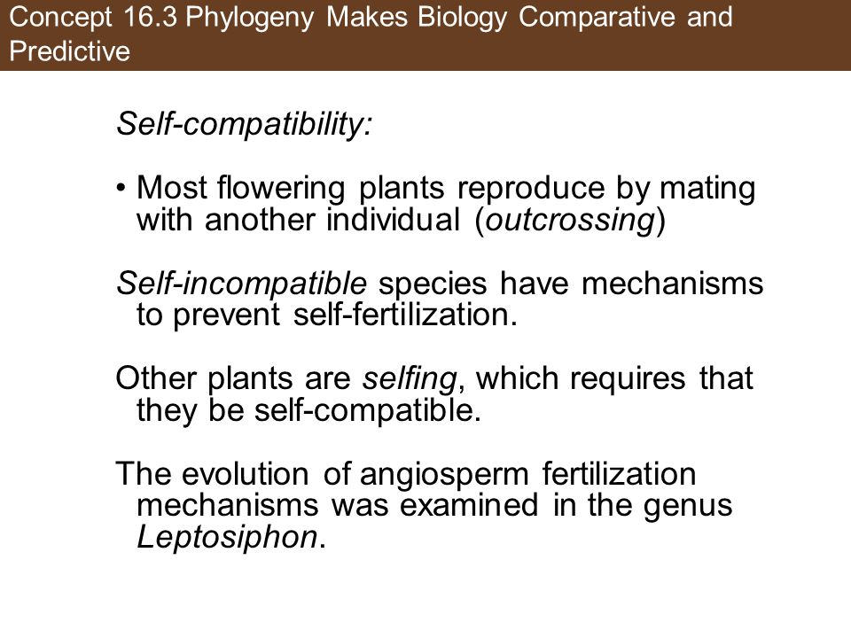 Concept 16.3 Phylogeny Makes Biology Comparative and Predictive Self-compatibility: Most flowering plants reproduce by mating with another individual (outcrossing) Self-incompatible species have mechanisms to prevent self-fertilization.