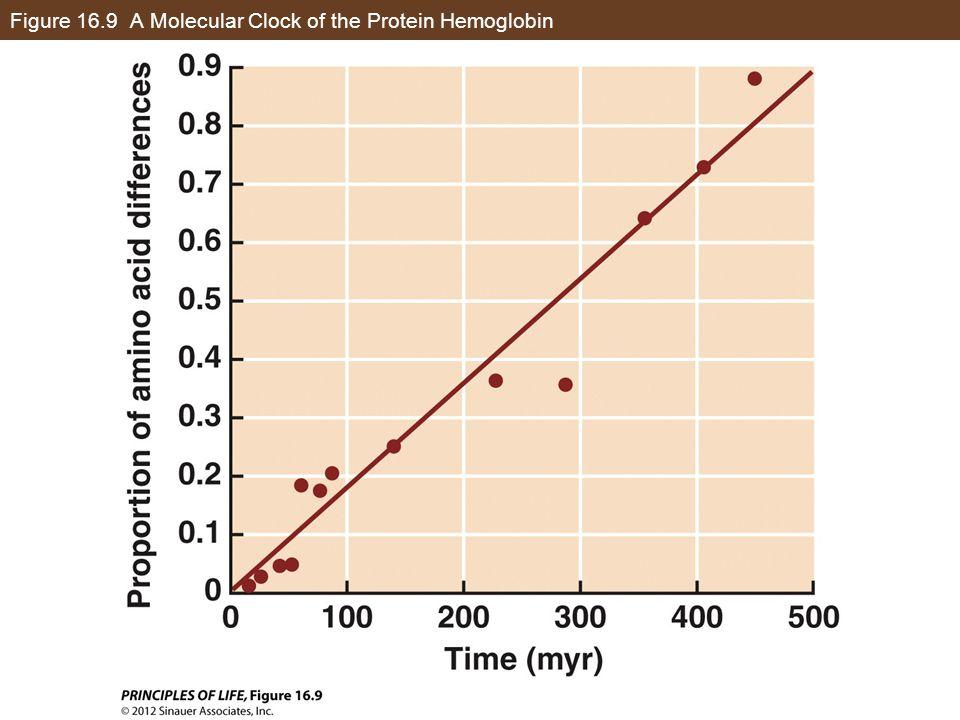 Figure 16.9 A Molecular Clock of the Protein Hemoglobin